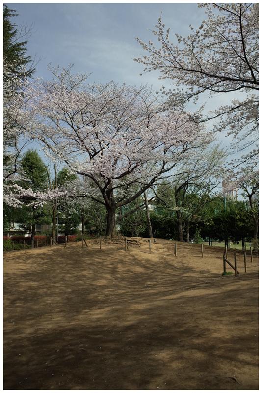 Sakura800