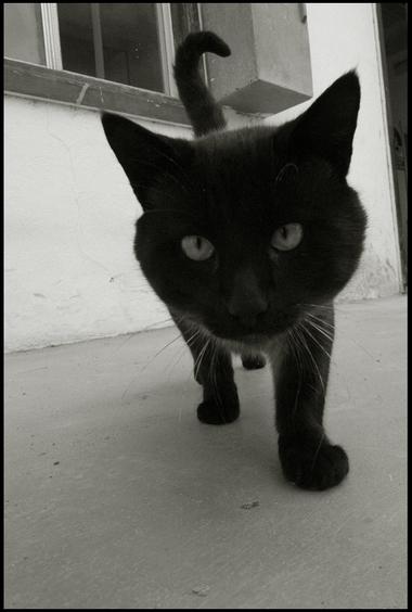 catblackcat