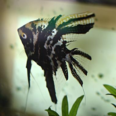 fishIMG_6252