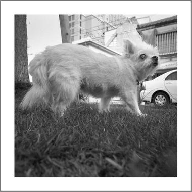 Okinawadog